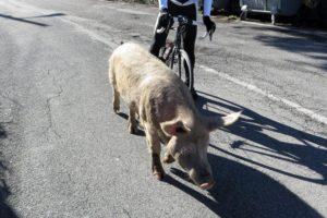 Winter Rennrad Abenteuer im Apennin winter reisen touren allgemein Rennradtour Rennradreise Italien Apennin